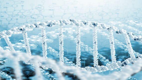wissenwertes zu der dna bei einer eizellenspende ueber das embryo